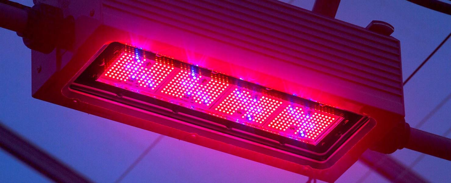 Medicinale cannabis goed met LEDs te telen