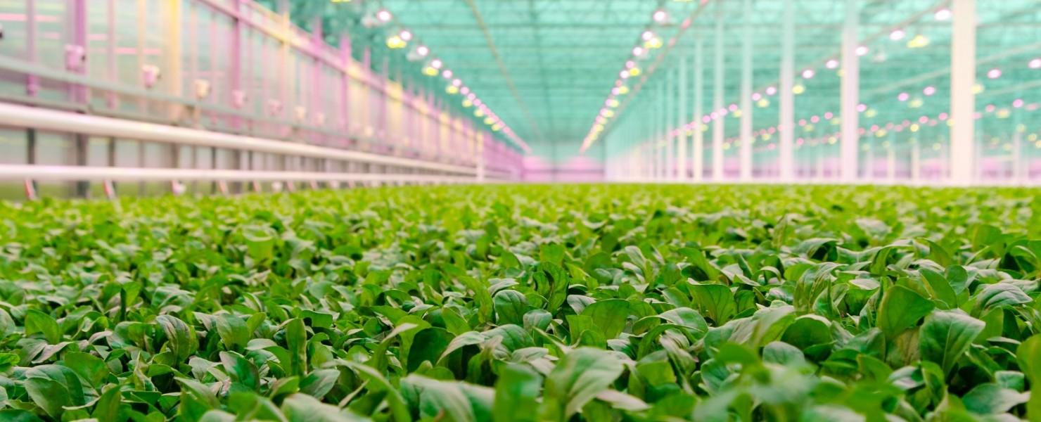 Innovatieve techniek bij Little Leaf Farms